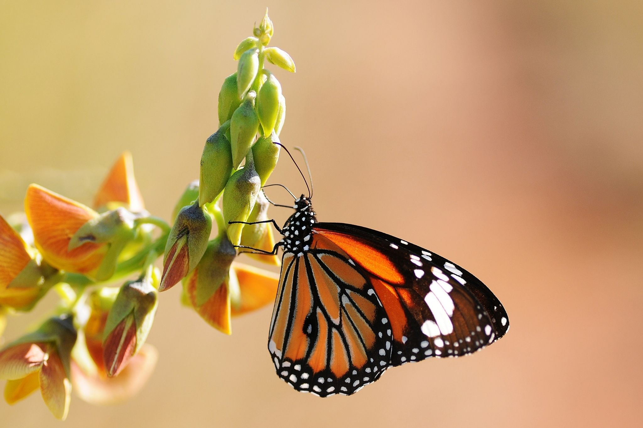 Image of a butterfly sitting on a plant at the Coffs Harbour Butterfly House in Coffs Harbour NSW