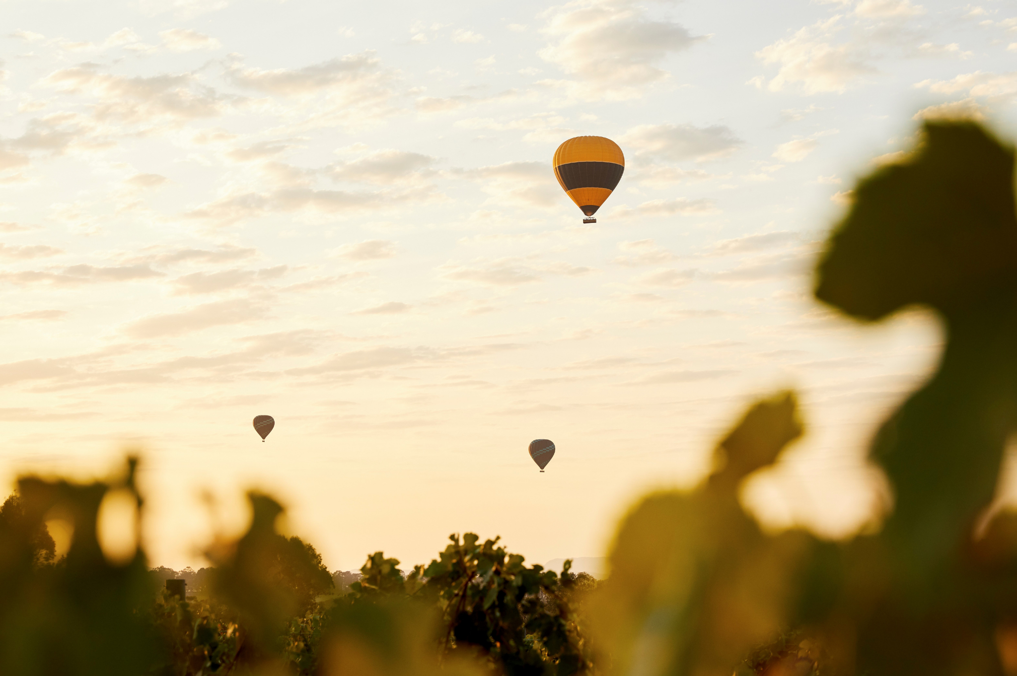 Image of Hot Air Balloons in the sky in the NSW Hunter Valley