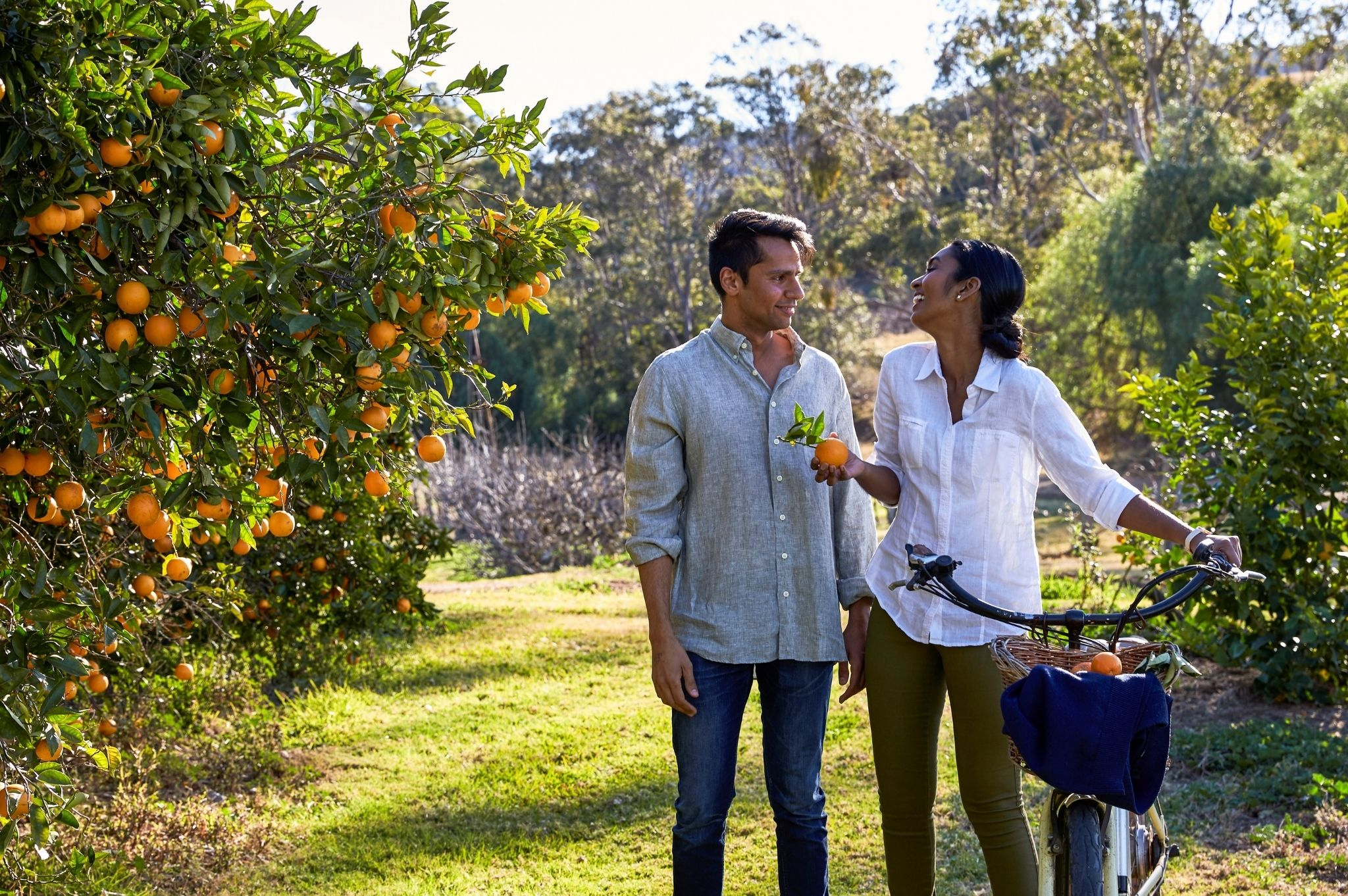 Image of a couple picking fruit at Tinklers Wine, Pokolbin in the NSW Hunter Valley