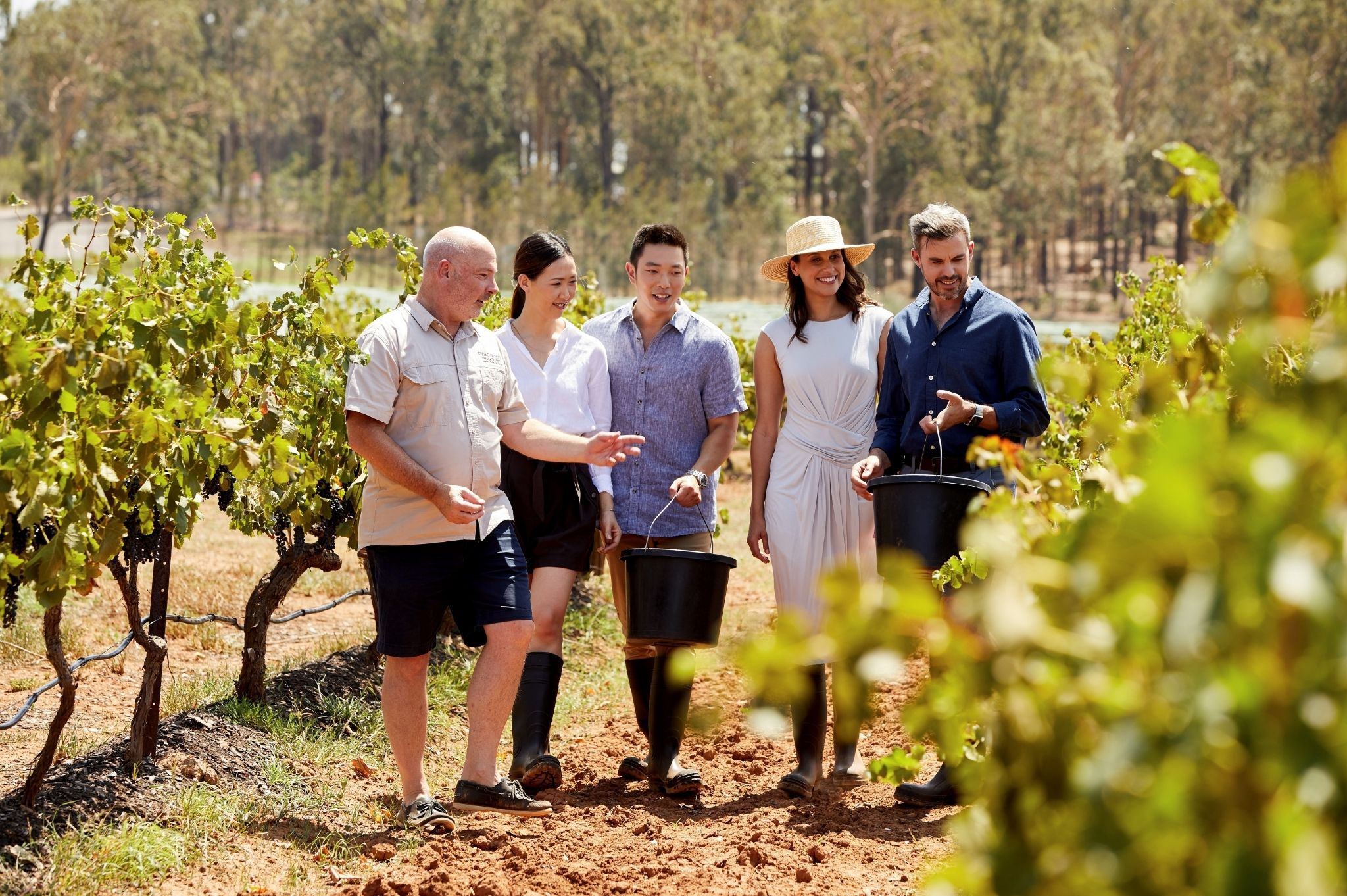 Image of couples enjoying a vineyard tour at Brokenwood Wines, Pokolbin in the NSW Hunter Valley
