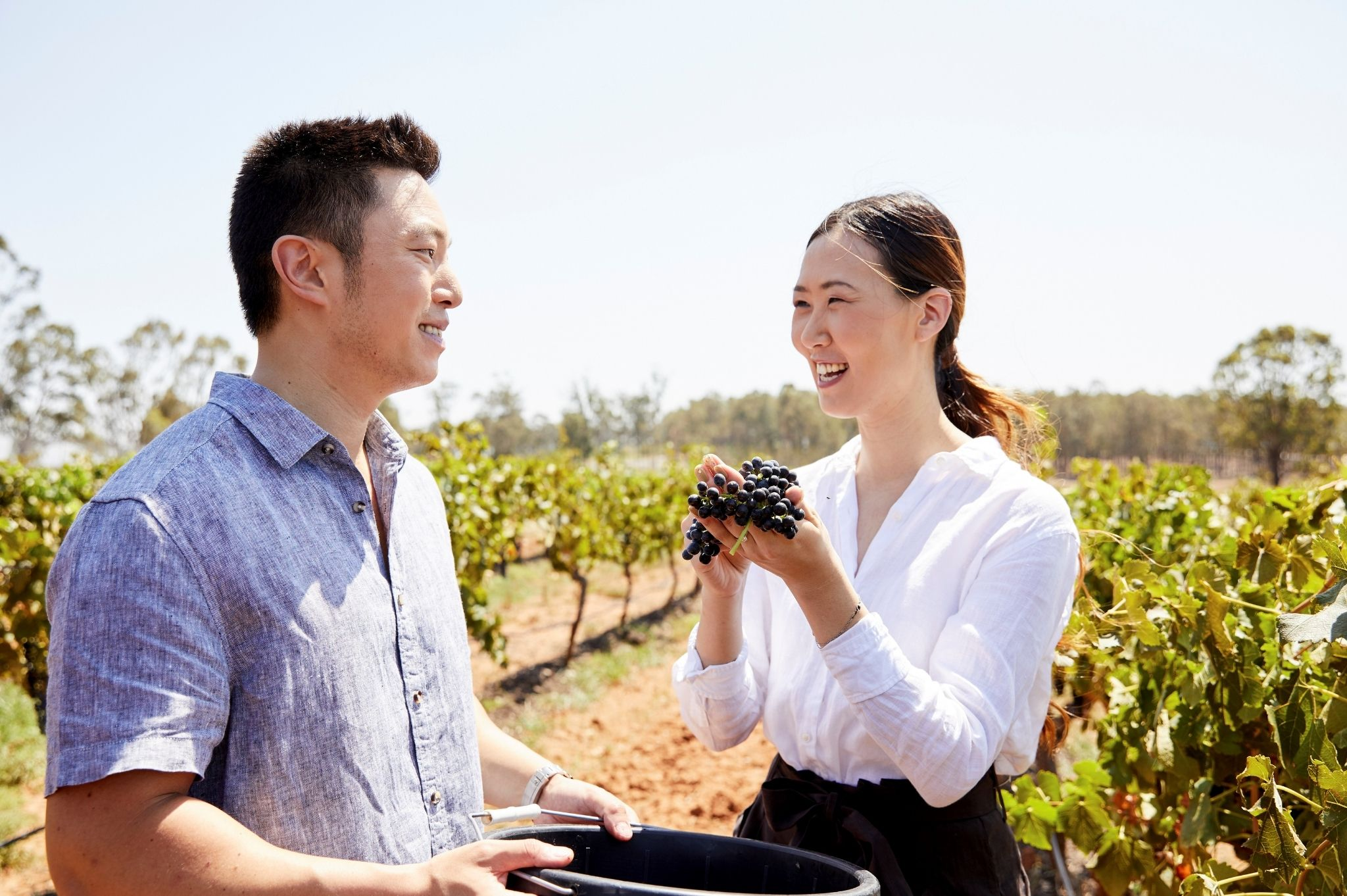Image of a couple on a winery tour at Brokenwood Wines, Pokolbin in the NSW Hunter Valley