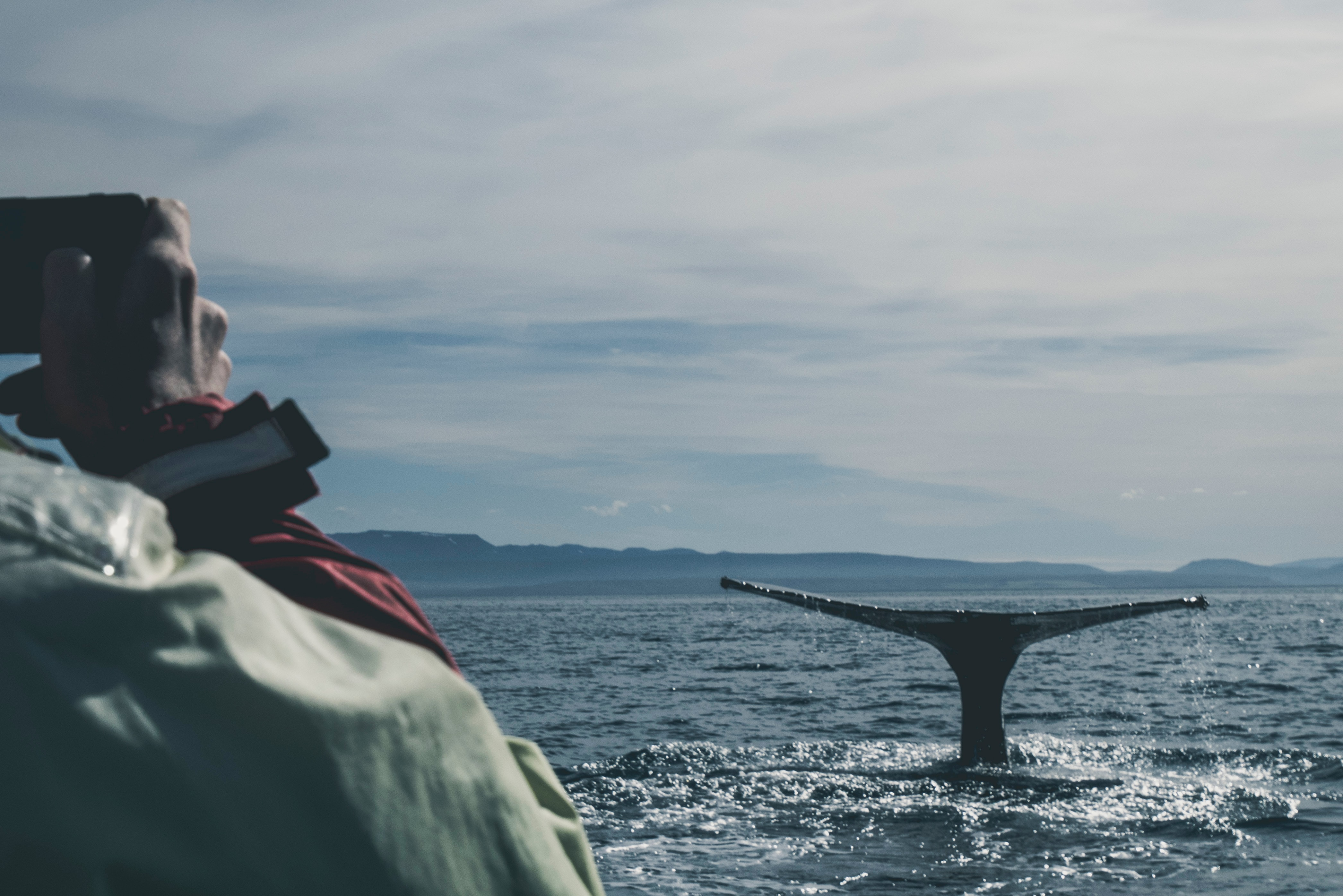 whale_watching_photography_2