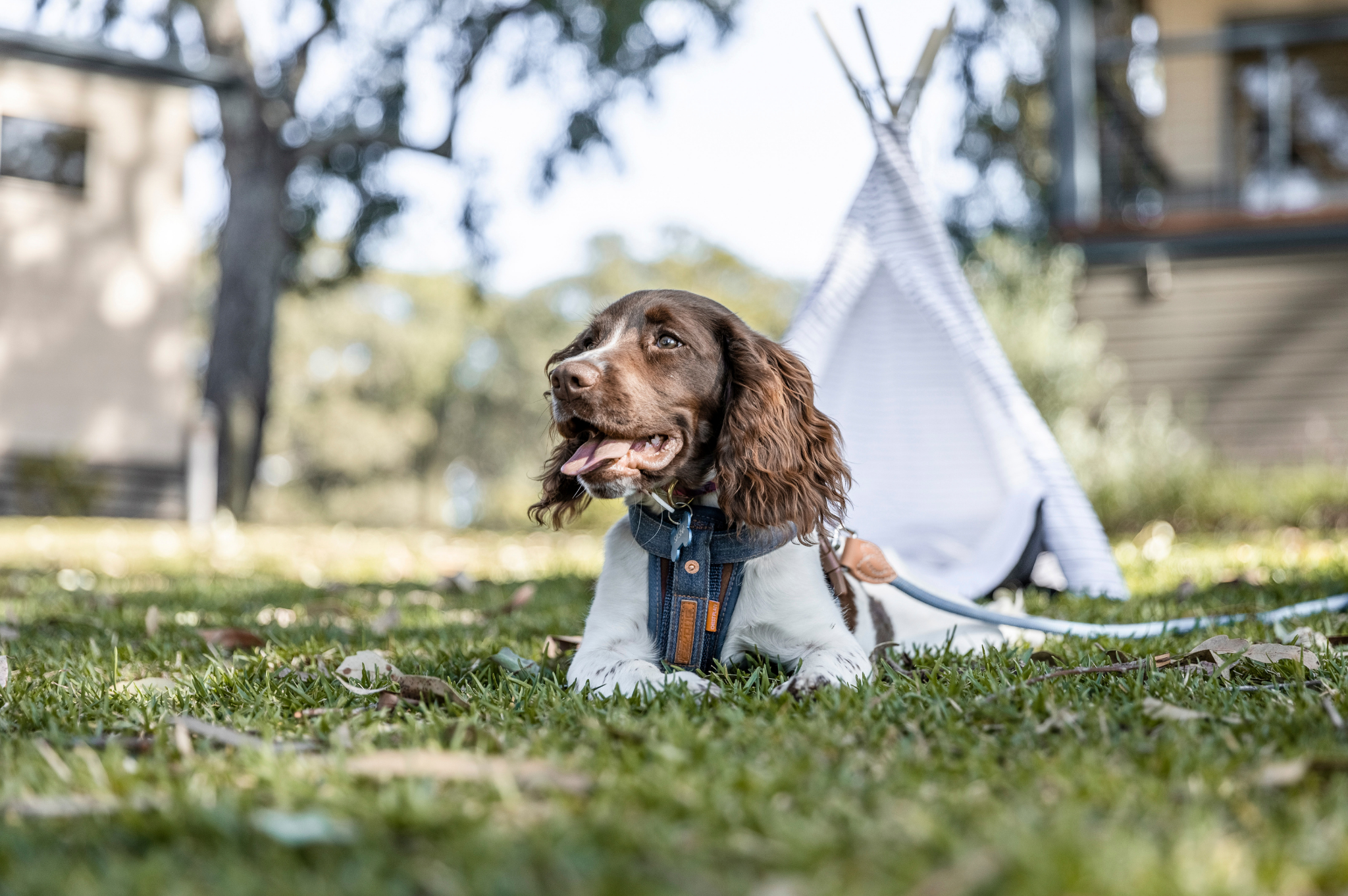 Image of dog in front of small tent at Reflections Holiday Parks Moonee Beach